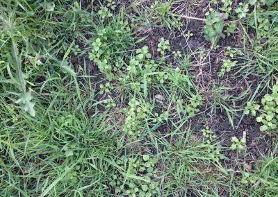 Natural Paddock Fertiliser