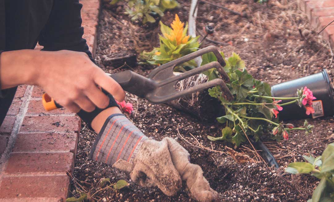 Introducing: Microbz for your garden
