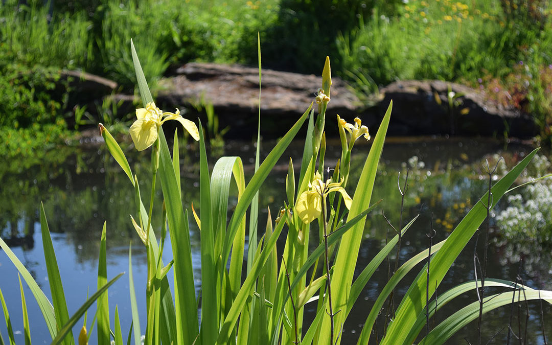 How we revived our pond: make your own wildlife haven this summer