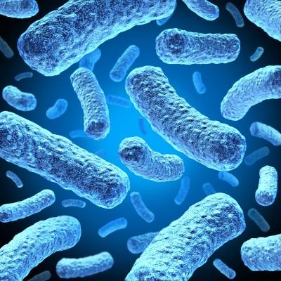 Bifidobacterium Breve: an image of a probiotic bacterium